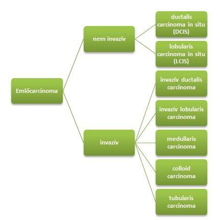 Intraductalis papilloma: okok, tünetek, kezelés