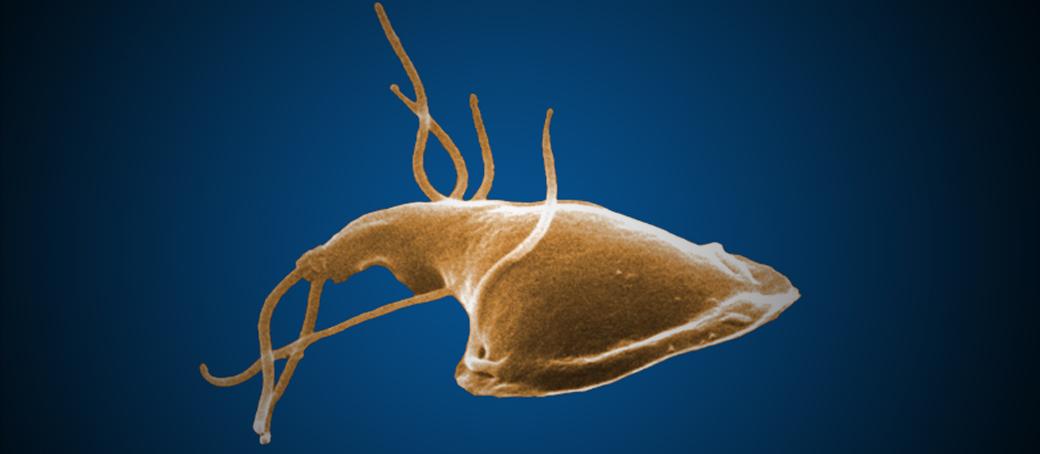 giardia bőrbetegség lapos papilloma hátul