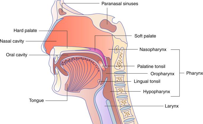 hpv sinus tumor emberi papilloma elváltozások