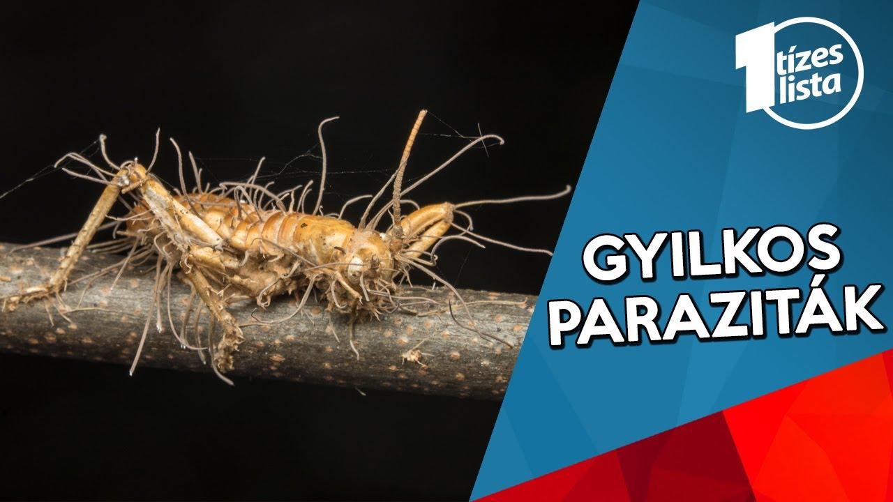 parazita társulás)