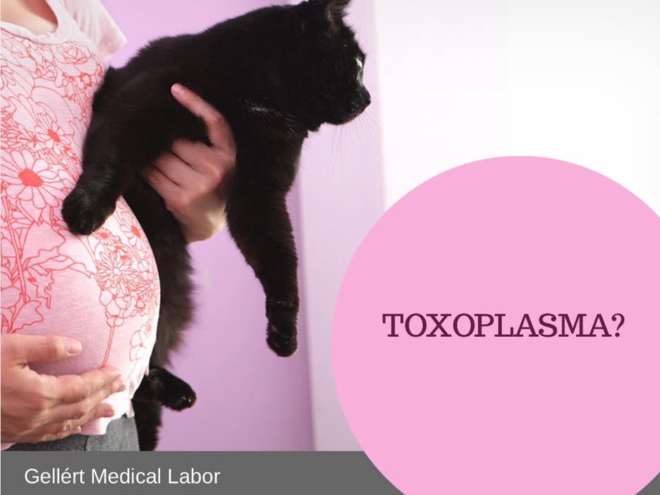 toxoplazmózis terhességi tünetekben gyógyszerek férgekkel történő kezelése