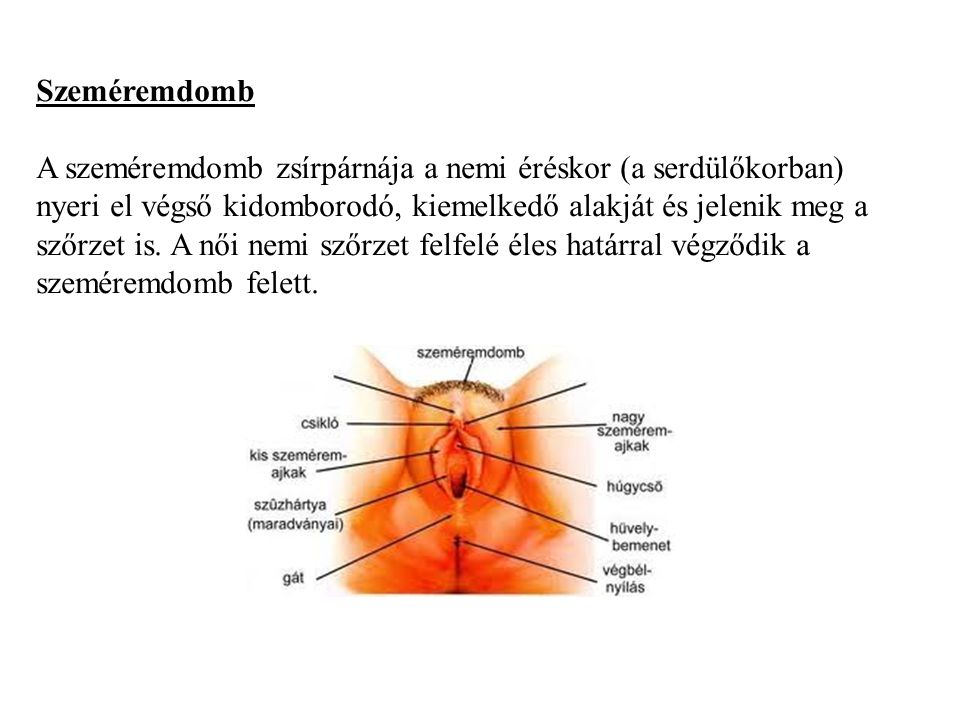 a húgycső külső nyílásának genitális szemölcsök hogyan lehet férgeket szerezni a napon