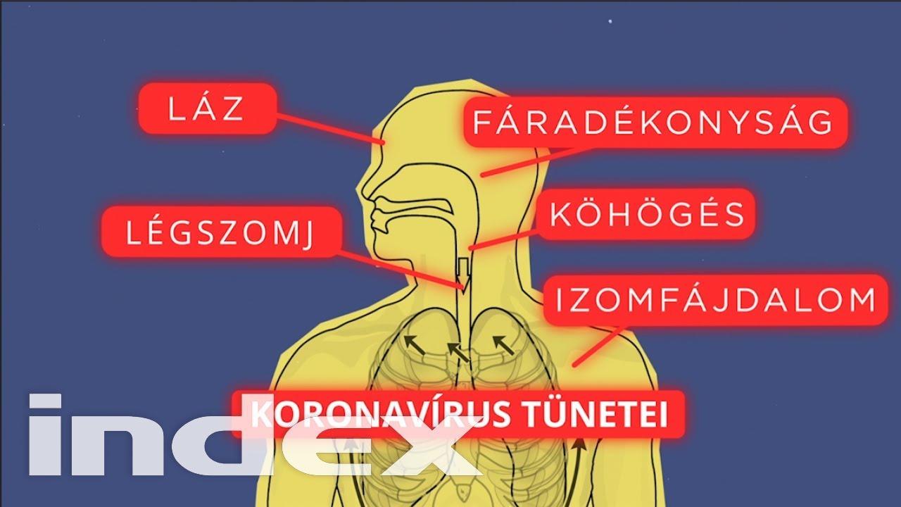 a gömbférgek tünetei neuroendokrin rák gyógyítása