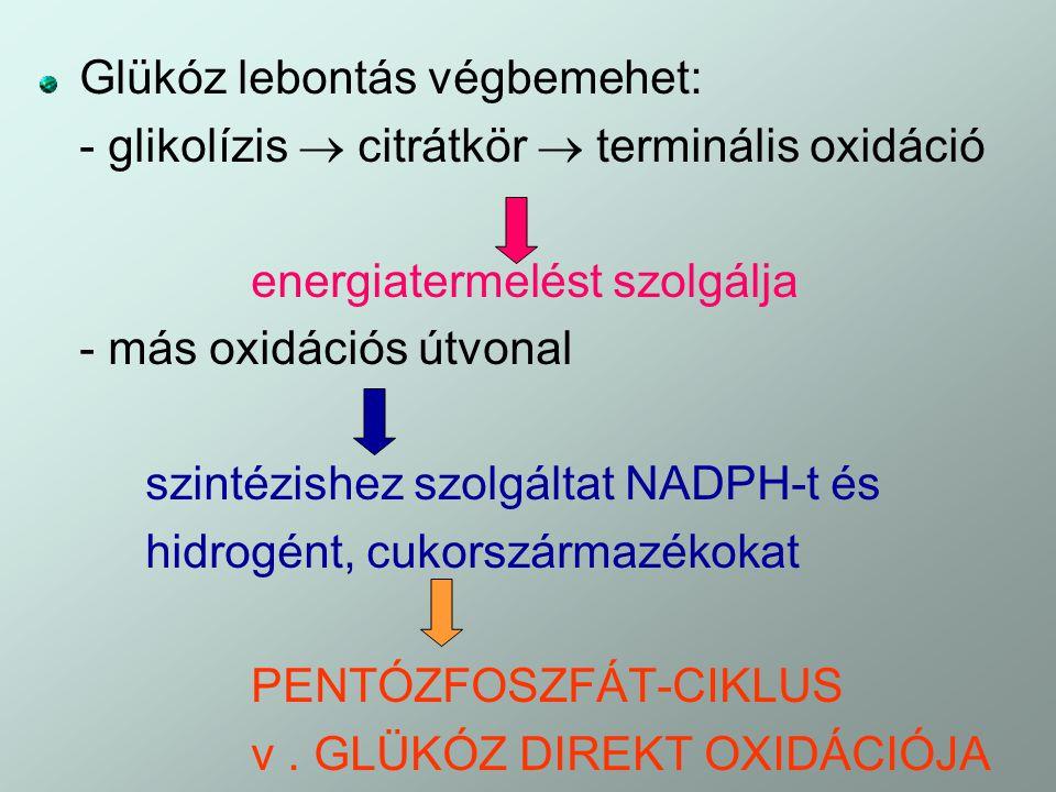 glikokonjugátumok kölcsönhatásban a gazda helmintussal
