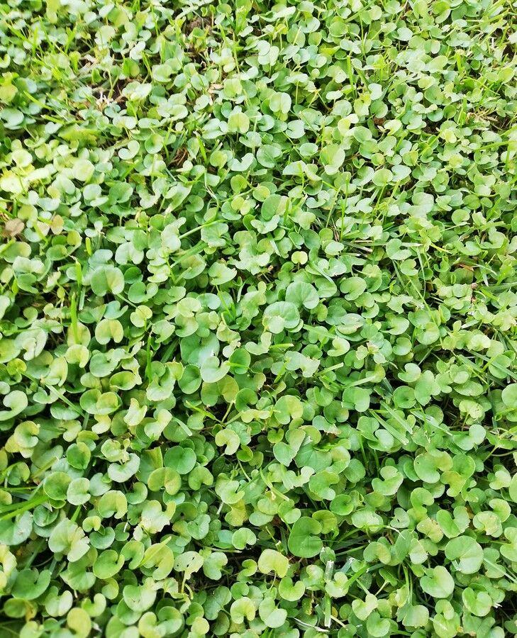 zöld ültetés kriofarm vélemények)