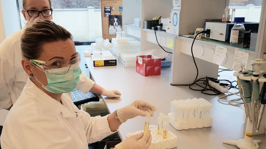 hpv magas kockázat a laboratóriumi számlán készítmények az emésztőrendszeren kívüli helminthiasisra