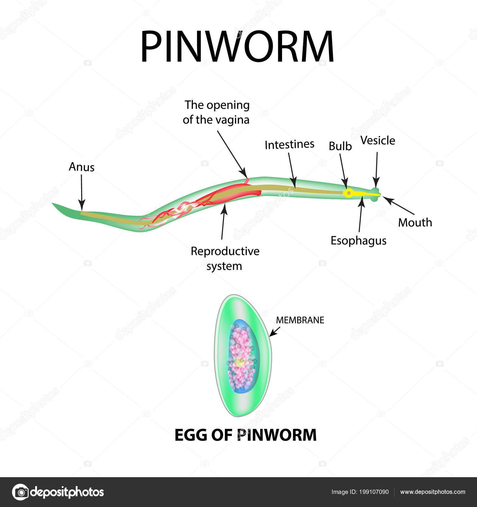 befolyásolhatja e a Trichomonas a hatékonyságot belek és paraziták megelőzése