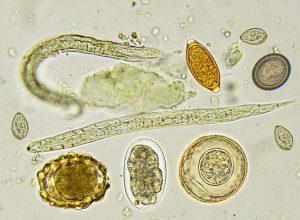 parazita amit esznek