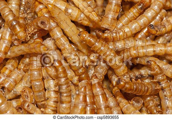 cickafark segíti a parazitákat a pinwormák kezelése emberben