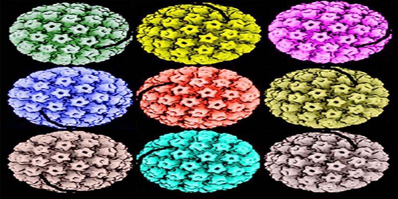 45. papillomavírus vírus