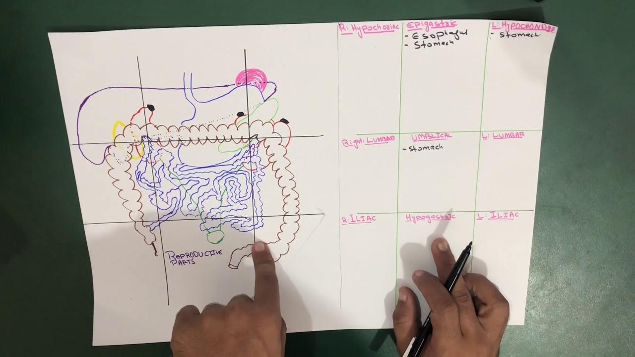 a bika galandférgének következményei bekötözött paraziták és kezelésük
