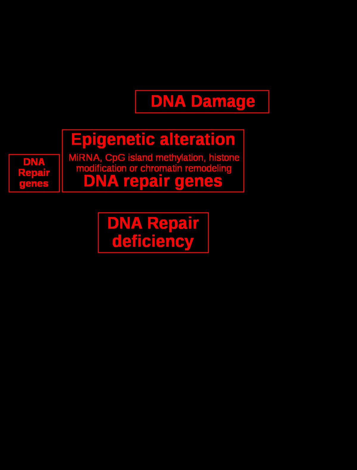 papillomavírus onkogén meghatározása papilloma az orvos nyelvén