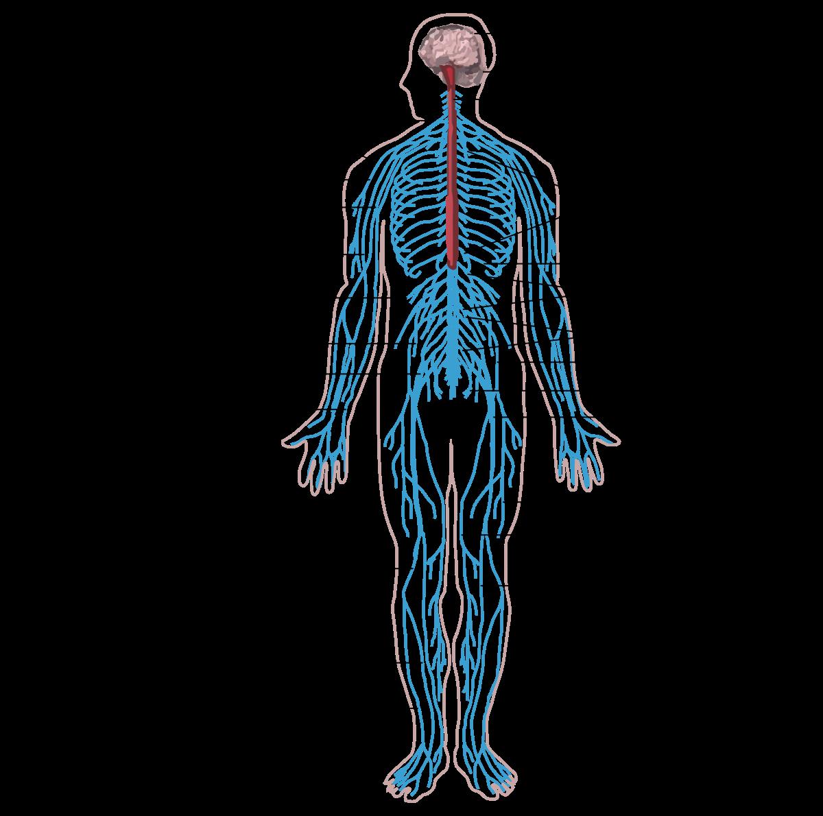 paraziták az emberi test pirulákkal történő kezelésében férgek jelei az emberi testben