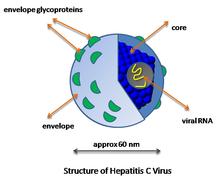 vírus z ovojnico biliáris rák prognózisa