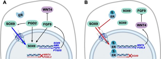 immunmodulátorok a genitális szemölcsökhöz műparazita sexting tippek