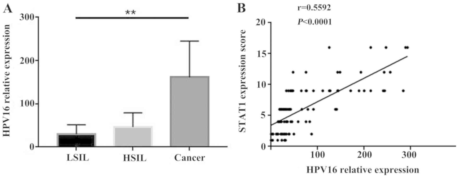 papillomavírus onkogén hpv 16 viaszméretek