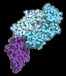 a papillomavírus gyógyítja