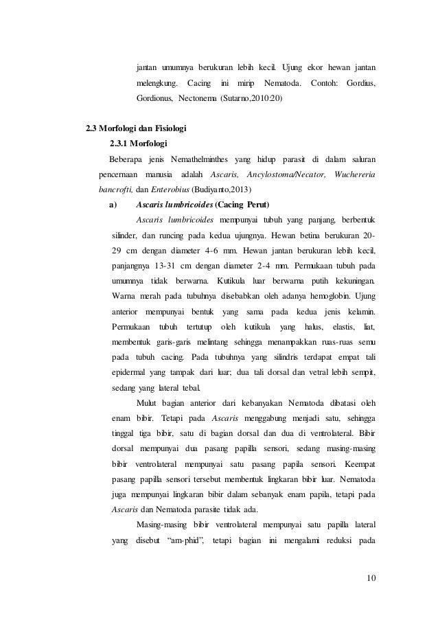 Filum nemathelminthes, Révai Nagy Lexikona, 7. kötet: Etelka-Földöv (1913)