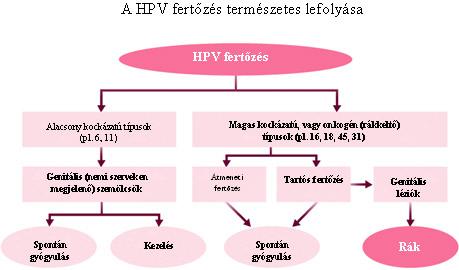 papillomavírus fertőzés típusai intraductalis papilloma a mellben