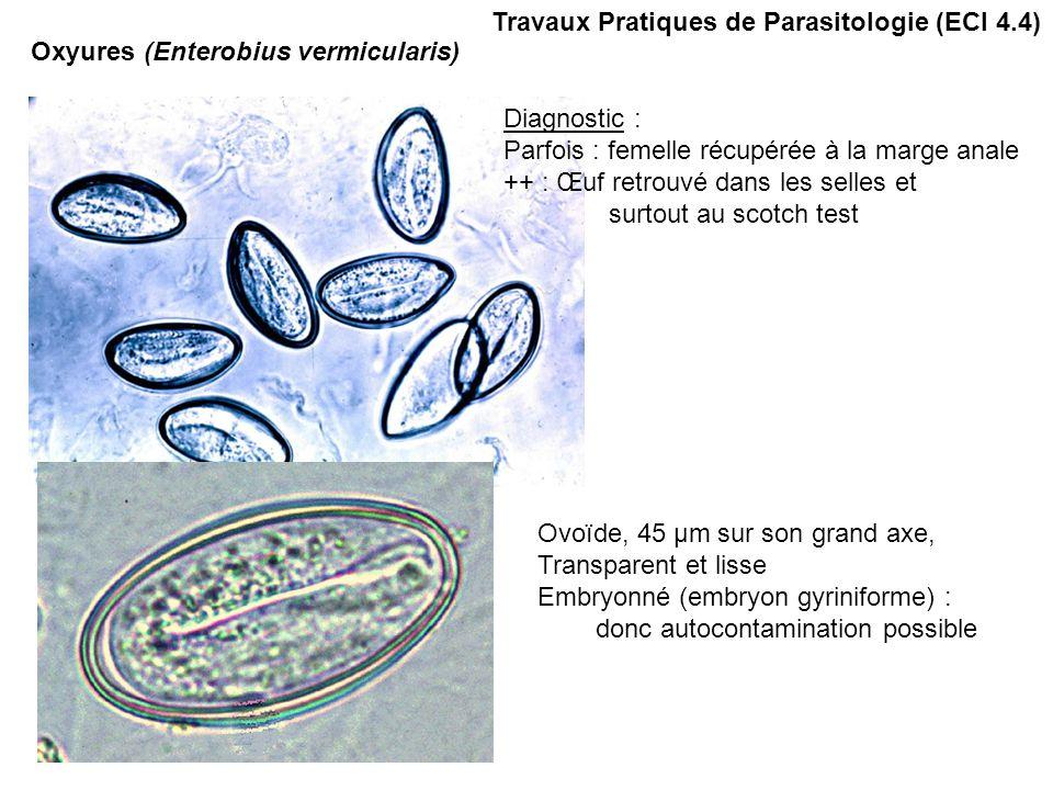 genitális szemölcsök a végbélnyílás kezelésében