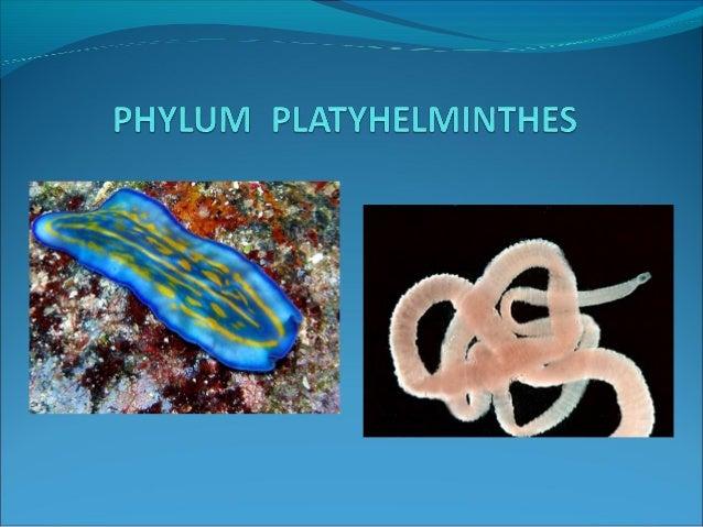 filo platyhelminthes monogén osztály Gyógyszerek a HPP kezelésére