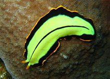 filo platyhelminthes monogén osztály orsóférgek és más paraziták elleni gyógyszerek