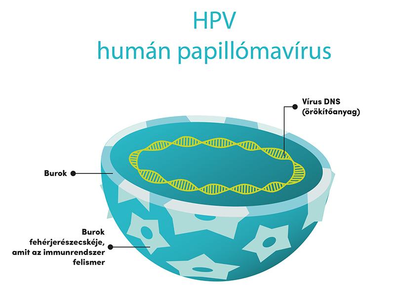 hpv vírus és halsen