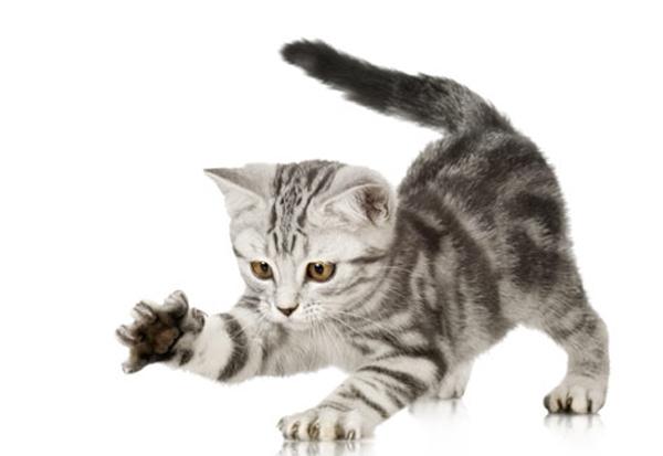 kedi d s yalarsa paraziták