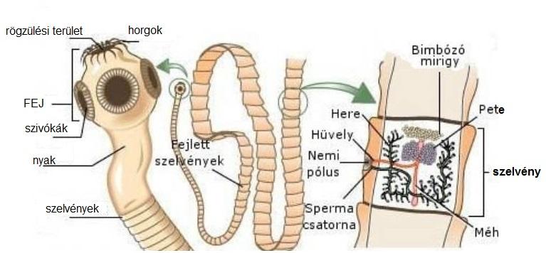 giardia bőrbetegség papilloma vírus sinus tünetei