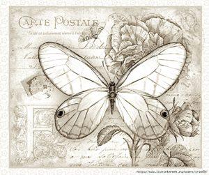 pillangó ayscha vagy zeugma