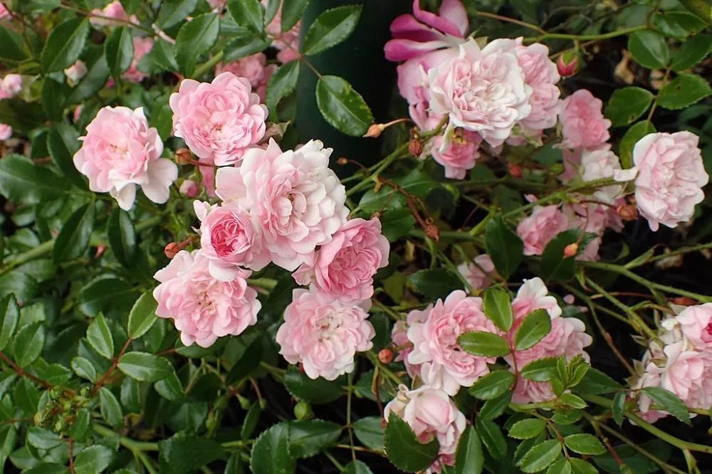 tündér virágos kert Vastagbél méregtelenítés 2 hét