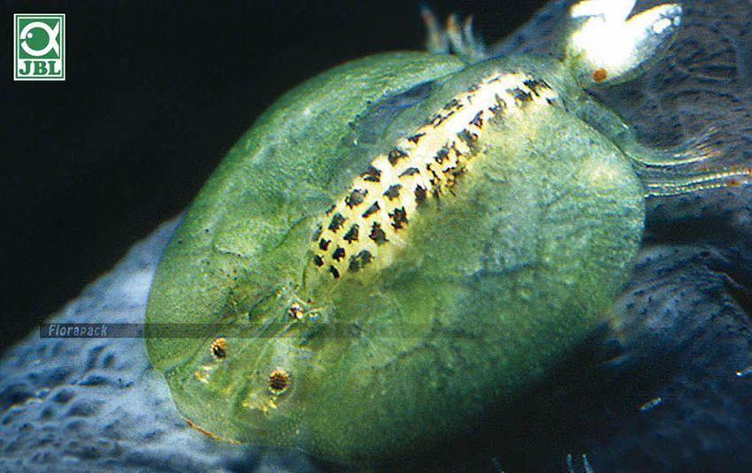 paraziták a kerti férgekben)
