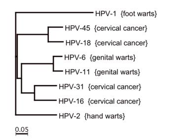 természetes gyógymódok a papilloma vírus ellen