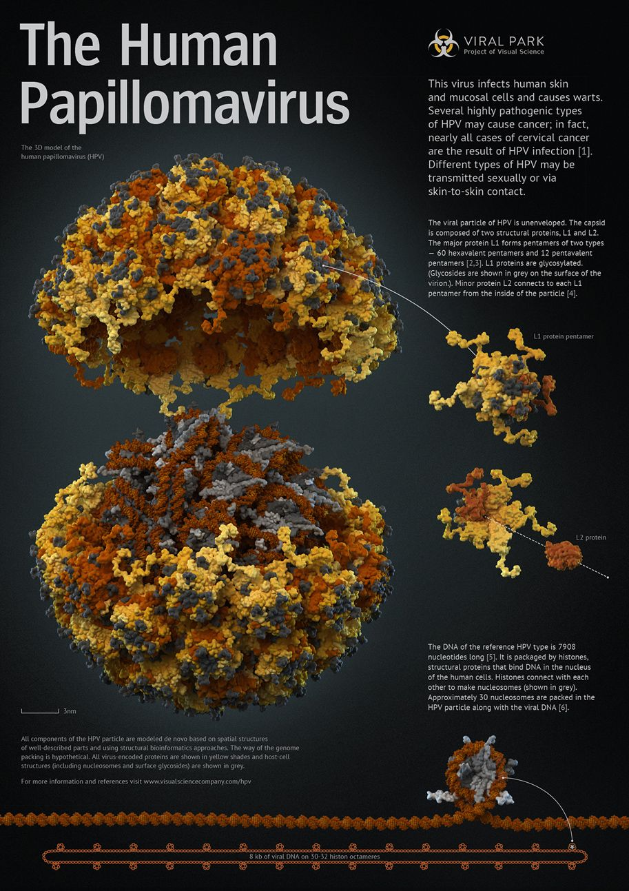6. számú papilloma vírus férgek kezelése az emberi méret