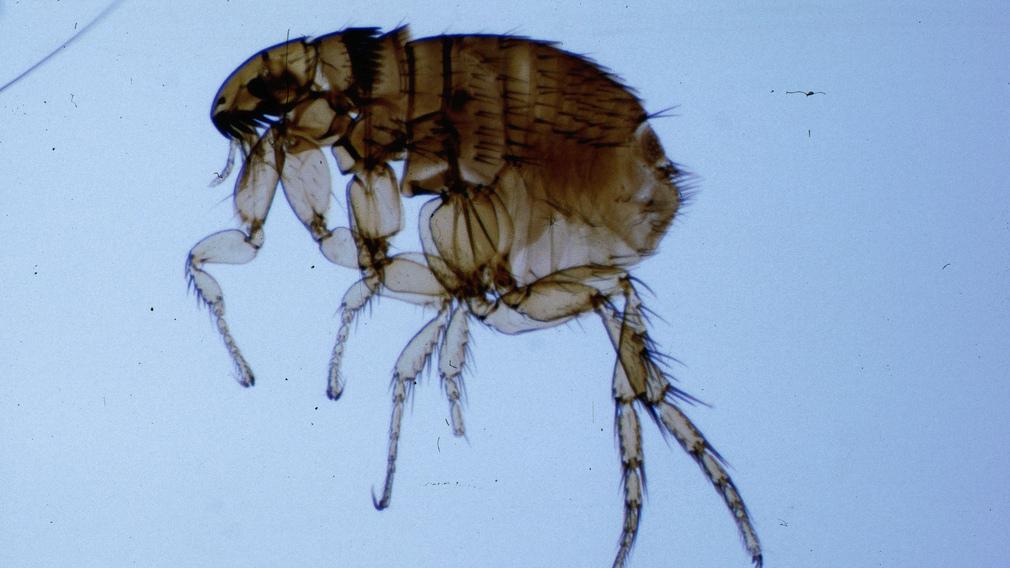 hogyan lehet kezelni a hagymát a paraziták emberi szem féreg