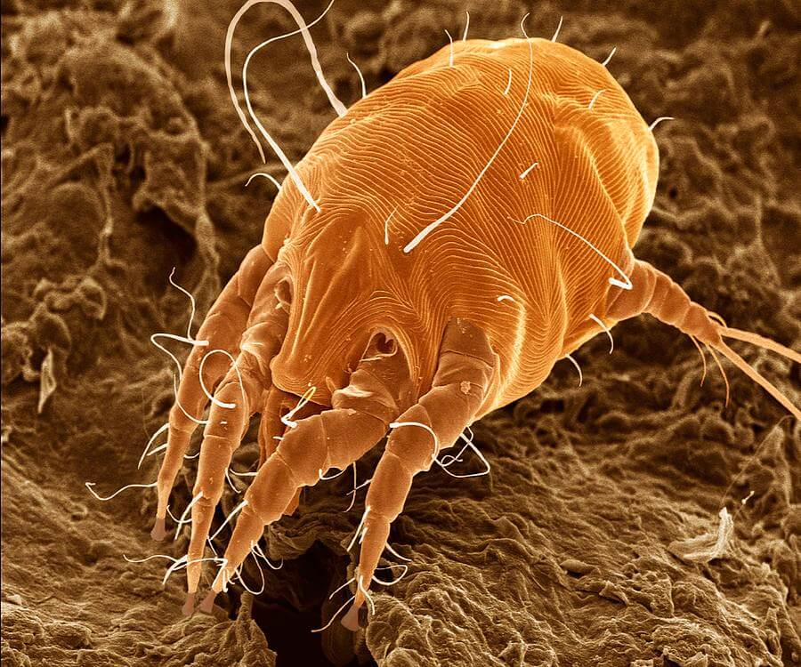 Paraziták a fülekben, A leggyakoribb, kölyköket veszélyeztető paraziták