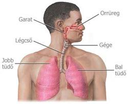 légcső rák tünetei